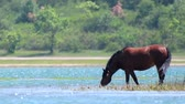 грива : Chestnut horse grazing on the shore of a large lake.