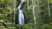 Kumoi waterfall in the Oirase stream valley, Aomori prefecture, Japan. Vídeos