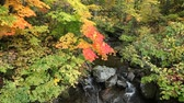Colorful maple leaves over the stream in early autumn.
