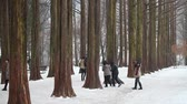 CHUNCHEON, KOREA -DEC 16: Tourists walking at The Metasequoia footpath on Dec 16, 2012 in Namiseom, Chuncheon, South Korea. This Metasequoia path attracted 2.3 million visitors in 2012. Vídeos