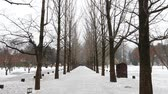 The Metasequoia footpath on Namiseom island in winter. Vídeos