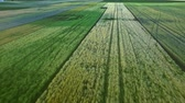 iz : Rural landscape agriculture farming. Rural field aerial view. Sky view agricultural field background. Wheat field landscape. Beautiful view green harvest field