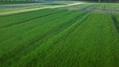 campo : Wheat field landscape. Grain growing on farming field. Aerial view green barley on agricultural field. Rural farming. Beautiful aerial landscape colorful harvest field