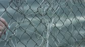 entwine : Female hand touching fence mesh with dry plant stems during walk on street. Young woman walking past touching hand fence mesh. Lonely woman concept Stock Footage
