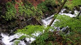 brushwood : Waterfall falling in wooded area at spring. Cascade waterfall in mountains. Forest river stream. Falling water from cascade waterfall in mountains. Picturesque ravine with mountain river Stock Footage