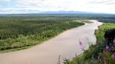 landschaft : Copper River in Alaska fließt im Sommer Stock Footage
