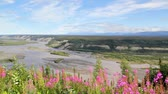 Уайлдфлауэр : Copper river view with fireweed