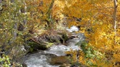 осень : Creek in the Sierra mountains with fall color