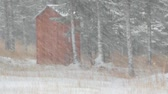 Outhouse in a spruce forest with snow falling Stock Footage