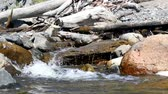Water flowing in a creek with rocks and driftwood Stock Footage