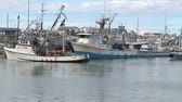 Fishing boats in the harbor in Homer, Alaska from the view of a small boat moving by Stock Footage