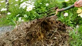 arremesso : Slowly turning a compost pile in the garden with a pitch fork with daisies in the background.