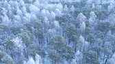 Beautiful winter forest. Aerial view from the drone.