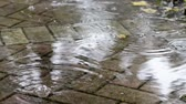 patio : Close up rain drops in puddle on brick pavement