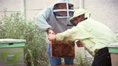 bowl : Two beekeepers put Queen bee in a new hive. Bees in apiary. Two beekeepers is shaking the bees from a frame into the hive during honey harvest.
