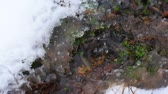 Slow motion of fall of water drops in puddle with snow around Stock Footage