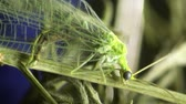 capa dura : green bug housefly macro Stock Footage