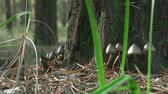 clorofila : small mushrooms under a tree autumn