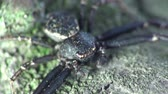 eye : Head Black spider insect macro