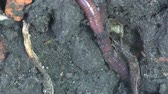 uvolněný : Earth worm is hiding in ground