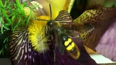 whiskers : Large wasp hornet macro flower Stock Footage