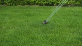 yards : Beautiful lawn of watering summer day. Garden concept.
