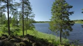 Gorgeous view on the lake through tall trees. Gorgeous nature landscape background. Sweden, Europe. Vidéos Libres De Droits