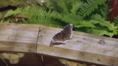 Close up view of gorgeous brown butterfly on wooden railing. Beautiful fauna backgrounds.