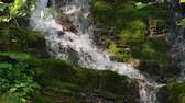 pedregulho : Epic Waterfall in the summer forest. Mountain stream nature background