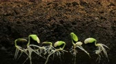 beslemek : Germinating Seed Growing in Ground Agriculture Spring Summer Timelapse