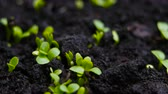 kiemkracht : Germinating Seed Growing in Ground Agriculture Spring Summer Timelapse