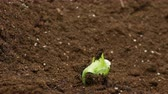 fértil : Growing plants in timelapse, sprouts germination newborn green plant agriculture Vídeos