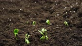 주기 : Growing plants in timelapse, Sprouts Germination newborn plant in Greenhouse Agriculture 무비클립