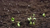 주기 : Growing plants in timelapse, Food Germination newborn Sprouts