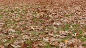 ayrılmak : Autumn dry leaves on the ground on a windy day Stok Video