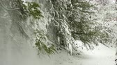 geada : Snow fall from tree
