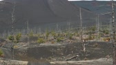 summer : Dead Forest near volcanoes. Kamchatka Stock Footage