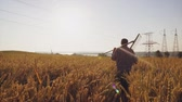 cultivating : Farmer woman holding agricultural tool passes through a wheat field at sunrise Stock Footage