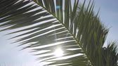 太陽光線 : The suns rays make their way through the branches of palm trees. Sky, clouds, breeze