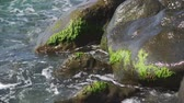 přílivový : Close-up, Surf, Stones on the seashore overgrown with algae, Slow Motion