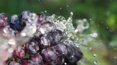 immerse : Slow motion A bunch of grapes under a stream of water Stock Footage