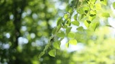 light : 93Forest trees leaf. nature green wood sunlight backgrounds. Stock Footage