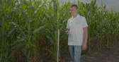 mais : Biologist or agronomist, measure the size of the corn field.