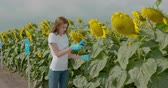 pesticide : Biologist or agronomist, takes analyzes in the fields. Stock Footage