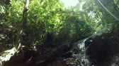 forest : HD Dolly: tropical waterfall in deep forest