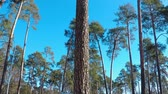 Panoramic shooting in the park on the outskirts of a pine forest with a playground and other buildings Stock Footage