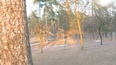 A short slow panorama of the spring park on the outskirts of the forest with tall pines and young trees, remnants of melting snow Stock Footage