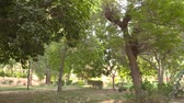 Green Parks in Riyadh Stock Footage