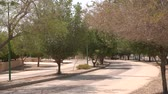 palmiye : Green Parks in Riyadh Stok Video