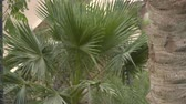religião : Green Parks in Riyadh Stock Footage